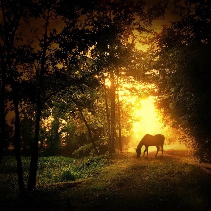 horse-e1332531218734