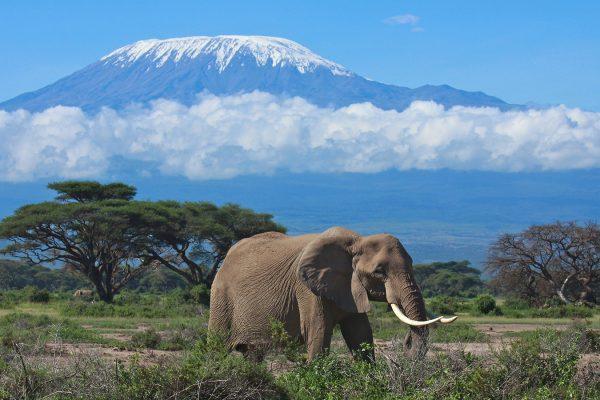 kilimanjaro_safari_elephant-600x400