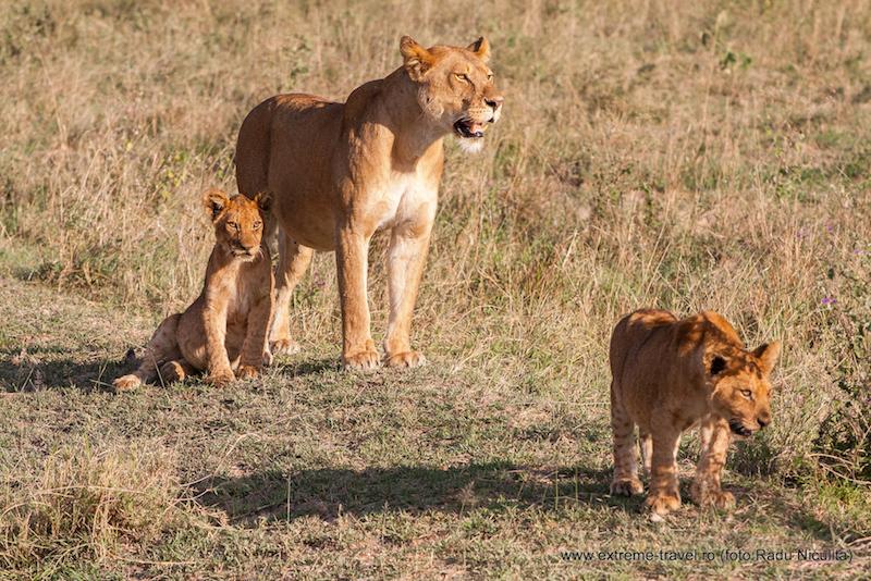 Safari_Serengeti