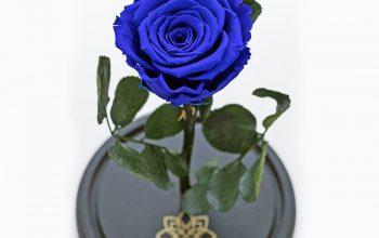Trandafir criogenat – ce este, avantaje, de unde îl cumperi?